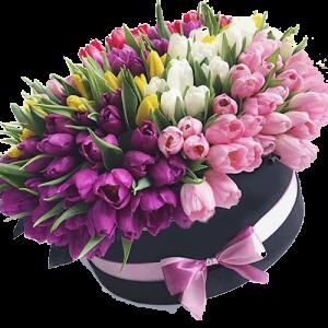 фото 151 тюльпан в шляпной коробке