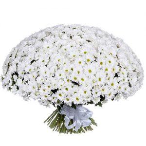 фото товара 101 ромашковая хризантема
